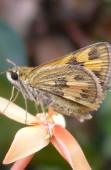 kupu-kupu kecil detail
