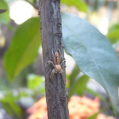 Laba-laba kecil di taman