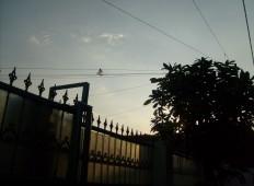 Pemandangan langit sore depan rumah 1